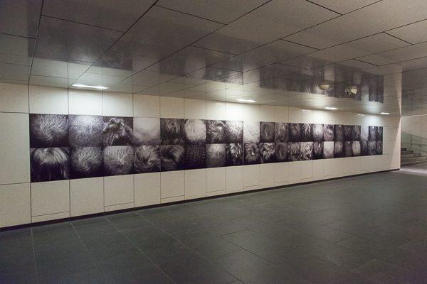 Vue de l'installation / Installation shot